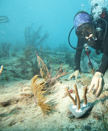 Canon Participates in the University of Miami's Coral Reef Restoration...